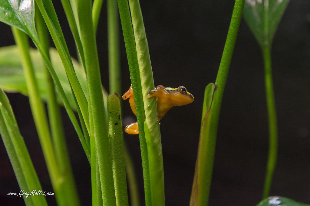 Frog-1.jpg