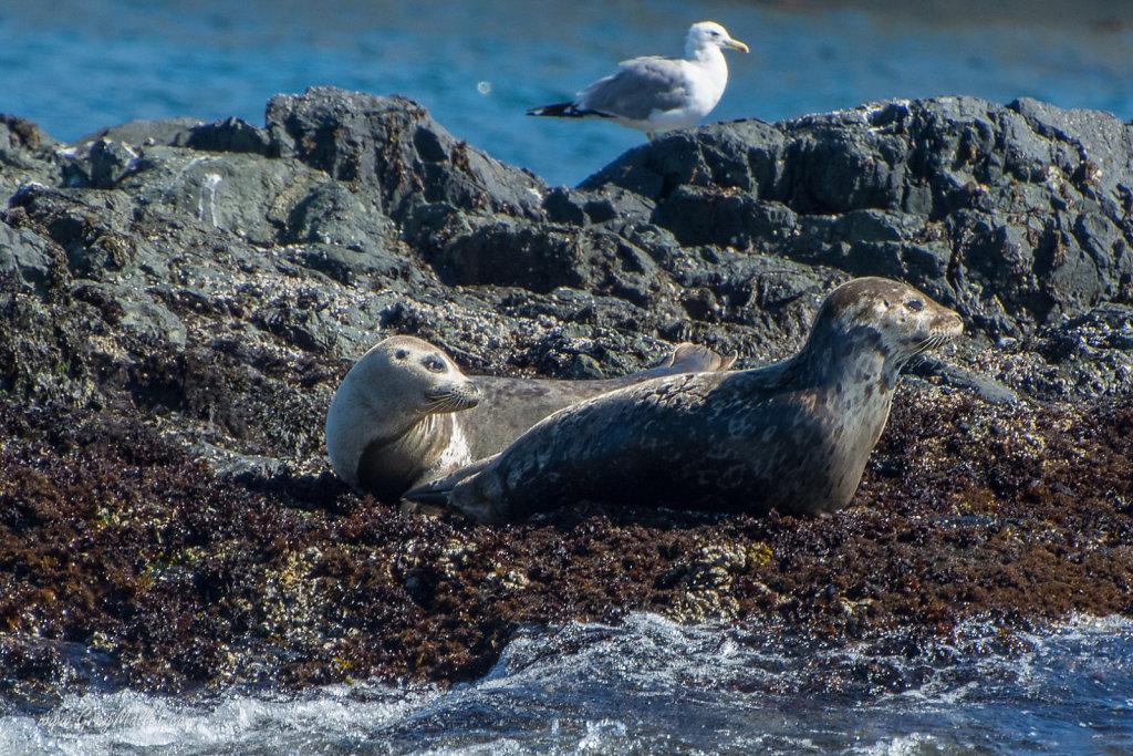 Seals-1.jpg